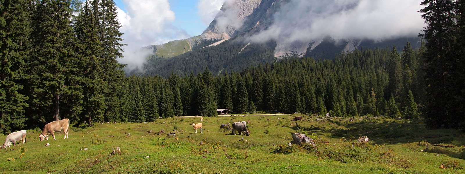 Ehrwald Natur Pur